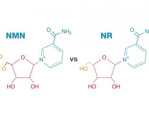 NMN–A Stable, Reliable NAD+ Activator and Anti-Aging Molecule and The Science Behind