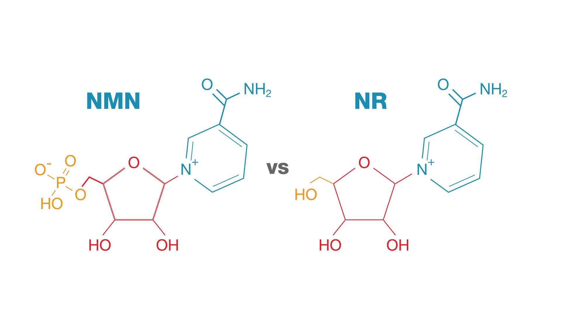 NMN_vs_NR